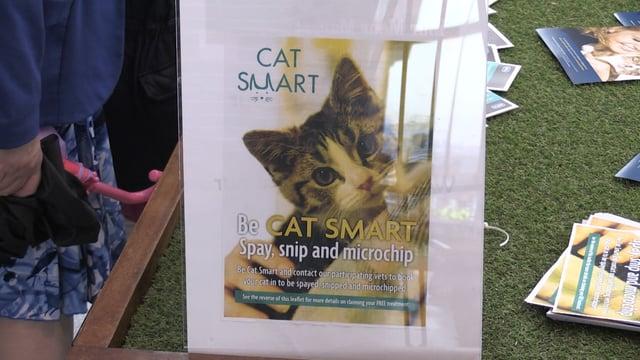 Sheffield charities work to address 'cat crisis'